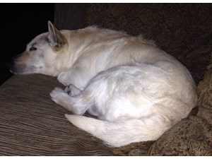 <a href='/pet-recovery/FoundPetPoster.aspx?sighting=22251' style='color:white; text-decoration:none;'>Mix (Dog)<br/>Fort Worth, TX</a>