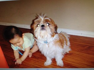 <a href='/pet-recovery/LostPetPosterOnline.aspx?lpid=41478' style='color:white; text-decoration:none;'>Chanel (Shih Tzu)<br/>La Mirada, CA</a>