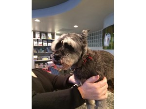 <a href='/pet-recovery/FoundPetPoster.aspx?sighting=22255' style='color:white; text-decoration:none;'>Schnauzer (Dog)<br/>PEMBROKE PINES, FL</a>