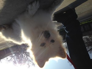 <a href='/pet-recovery/LostPetPosterOnline.aspx?lpid=41483' style='color:white; text-decoration:none;'>Koda (Pomeranian)<br/>Bakersfield, CA</a>