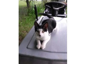 <a href='/pet-recovery/LostPetPosterOnline.aspx?lpid=41484' style='color:white; text-decoration:none;'>Ricardo (American Shorthair)<br/>paw paw, MI</a>
