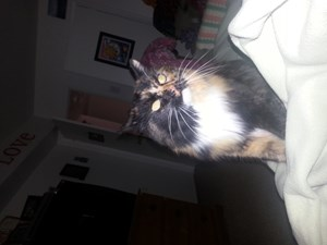 <a href='/pet-recovery/LostPetPosterOnline.aspx?lpid=41498' style='color:white; text-decoration:none;'>Sugar (Maine Coon)<br/>Blackwood, NJ</a>
