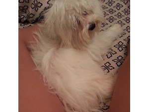 <a href='/pet-recovery/LostPetPosterOnline.aspx?lpid=41506' style='color:white; text-decoration:none;'> (Maltese)<br/>Wichita, KS</a>