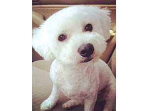 <a href='/pet-recovery/LostPetPosterOnline.aspx?lpid=41515' style='color:white; text-decoration:none;'>Bailey (Bichon Frise)<br/>Orlando, FL</a>