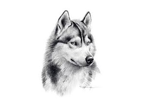 <a href='/pet-recovery/LostPetPosterOnline.aspx?lpid=41522' style='color:white; text-decoration:none;'>simon (Siberian Husky / Mixed)<br/>tomball, TX</a>