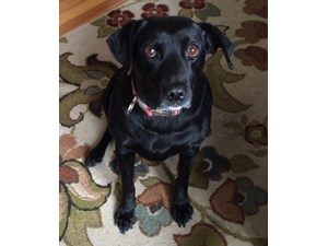 <a href='/pet-recovery/FoundPetPoster.aspx?sighting=22295' style='color:white; text-decoration:none;'>mixed (Dog)<br/>Washington, MO</a>