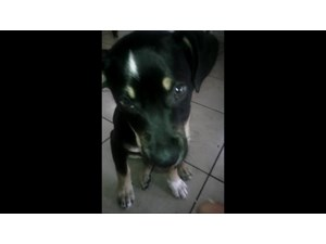 <a href='/pet-recovery/LostPetPosterOnline.aspx?lpid=41546' style='color:white; text-decoration:none;'>Melo (Mixed)<br/>rancho cucmonga, CA</a>