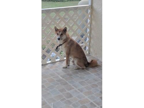 Lost Pet #87306