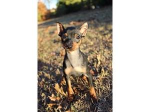 Spotlight Pet Photo