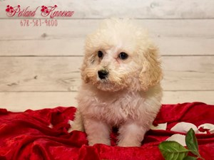 puppy photo gallery, Adopted Puppy Gallery