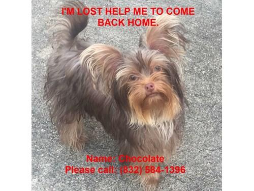 Lost Pet #87287