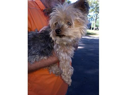 Found Pet #48418