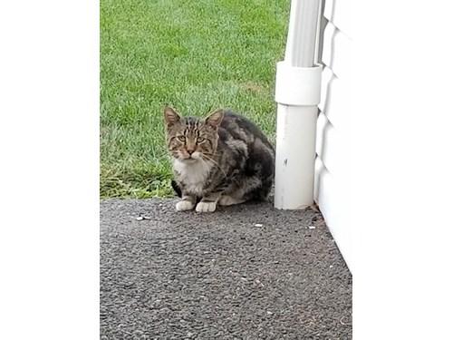 Found Pet #48420