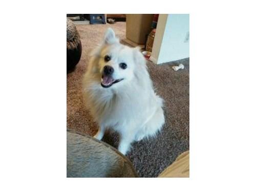 Lost Pet #89851